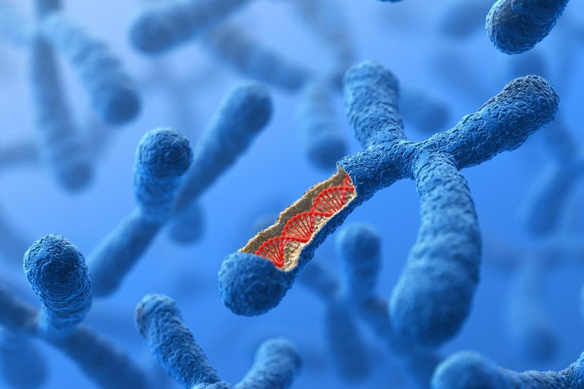 chromosom